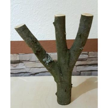 Baumstamm Linde verzweigt Ast Stamm Holz Skulptur Deko Terrarium Natur 30 cm