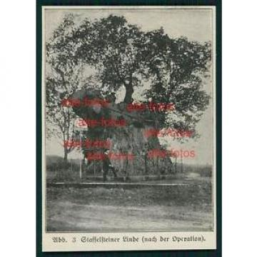 Ausschnitt von ca 1915 -  Staffelsteiner Linde