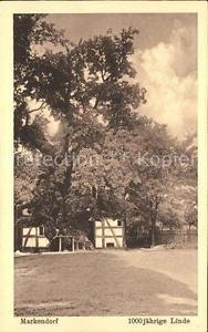 71840121 Markendorf Wiehengebirge 1000-jaehrige Linde Melle