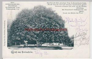 (108555) AK Gruß aus Bordesholm, alte Linde 1902