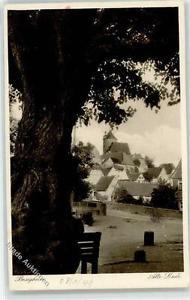 52390356 - Besigheim alte Linde