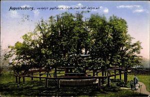 Ak Augustusburg im Erzgebirge, Verkehrt gepflanzte Linde, Zieher - 1305960