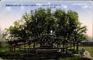 Ak Augustusburg im Erzgebirge, Verkehrt gepflanzte Linde, Zieher - 1332247