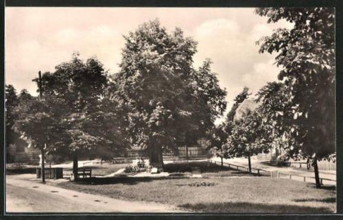 alte AK Oberhain, Dorfplatz mit alter Linde