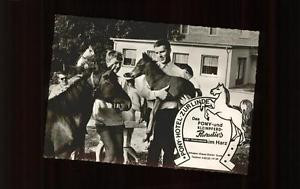 11292352 Pony Tiere Pony Hotel zur Linde Riefensbeek Tiere