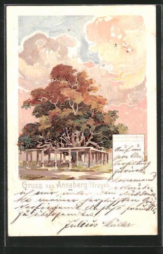 schöne Lithographie Annaberg, Linde auf dem Friedhofe 1901