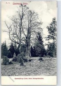 51020646 - Baeume Tausendjaehrige Linde