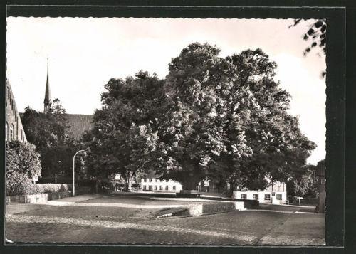 tolle AK Bordesholm, 300jährige Linde 1964