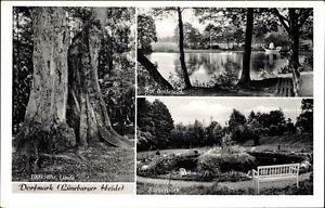 Ak Bad Fallingbostel im Heidekreis, 1000jh Linde, Badeteich,... - 1487257