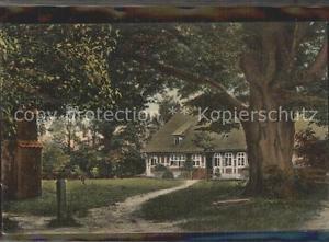 42363567 Bispingen 500jaehrige Linde mit Pastoral Bispingen Lueneburger Heide