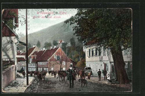 tolle AK Wildemann, Markt mit hist. Linde