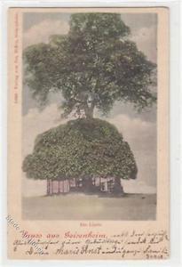 39093510 - Gruss aus Geisenheim. Linde gelaufen, 1902. Leichter Stempeldurchdruc