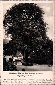 Ak Bad Thal Ruhla Thüringen, Gasthaus zur Linde, 600 Jahre alte Linde - 1315399