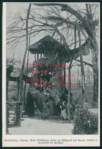 Ausschnitt von 1906 -  Linde im Wildpark des Grafen Schlick in Ji?ín?ves