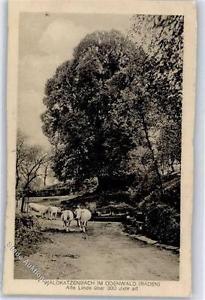 51373604 - Waldkatzenbach Linde 300 Jahre alt Preissenkung