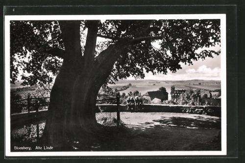 schöne AK Blomberg, alte Linde mit Blick zum Ort