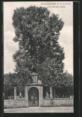 tolle AK Neuenstadt, 1000 jährige Linde, Eingangsportal zum Areal 1911