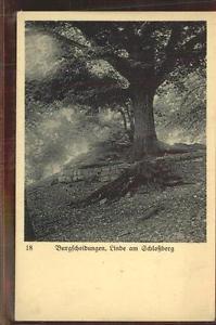41420454 Burgscheidungen Linde am Schlossberg Burgscheidungen