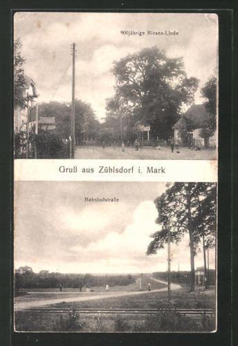 alte AK Zühlsdorf, 900 jährige Riesen-Linde, Bahnhofstraße 1927