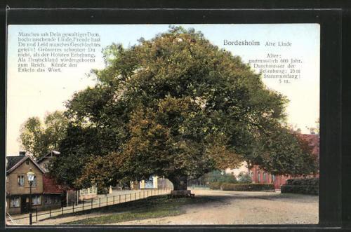 tolle AK Bordesholm, Partie an der alten Linde 1917