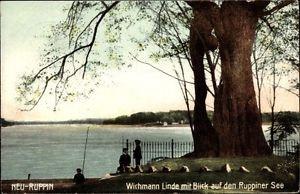 Ak Neuruppin in Brandenburg, Wichmann Linde mit Blick auf den... - 10048018