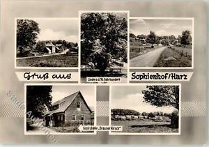 51922219 - Sophienhof b Nordhausen Gasthaus Brauner Hirsch alte Linde