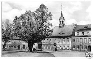 AK, Elstra Sa., Rathaus und 500 jährige Linde am Markt, 1960