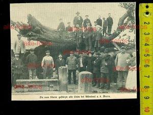 1912- vom Sturm gestürtzte Linde bei Allendorf a d Werra
