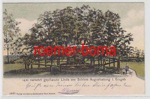 69339 Ak 1421 verkehrt gepflanzte Linde am Schloss Augustusburg i.Erzgeb. 1905