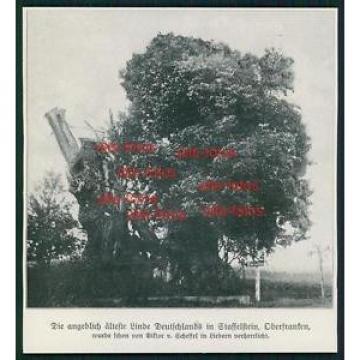 Ausschnitt von 1913 -  Linde in Staffelstein