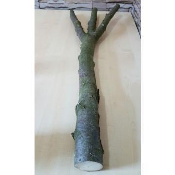 Baumstamm Linde verzweigt Ast Stamm Holz Skulptur Deko Terrarium Natur 85 cm