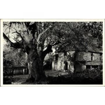 Ak Wilsede Bispingen im Heidekreis, Alte Kirche mit 500 jähriger Linde - 1434051