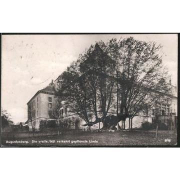 tolle Foto-AK Augustusburg, uralte 1421 verkehrt gepflanzte Linde