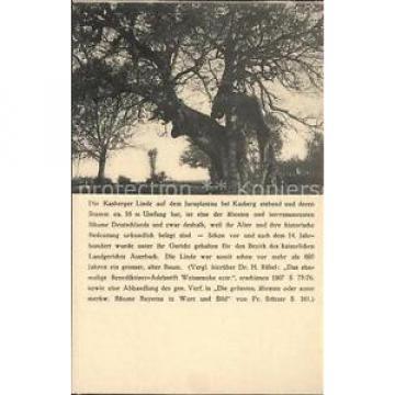 41611129 Baeume Trees Kasberger Linde Pflanzen