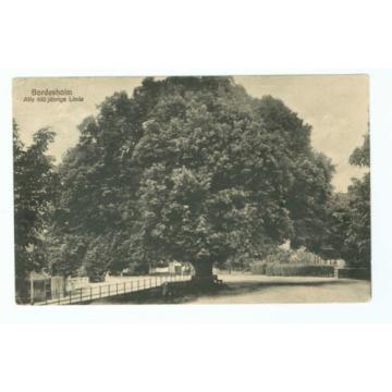 Bordesholm - 600 Jahre alte Linde