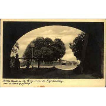 Augustusburg alte AK 1941 Durchblick zur uralten Linde Baum an der Burgmauer