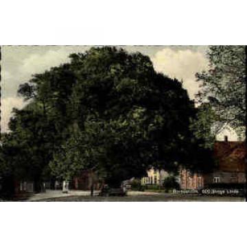 Bordesholm ~1950/60 Partie 600jährige Linde Baum Wahrzeichen Platz Menschen Haus