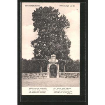schöne AK Neuenstadt, 1000 jährige Linde