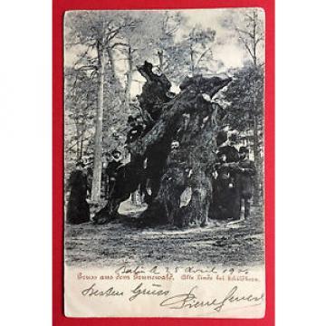 AK BERLIN Grunewald 1905 Alte Linde bei Schildhorn       ( 14686