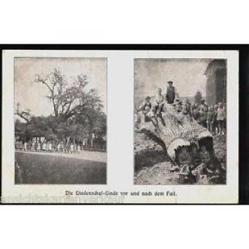 230.245 Die Lindenschul-Linde vor & nach dem Fall, Baum, Linde