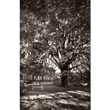 Drübeck Sachsen-Anhalt AK 1979 DDR Partie Alte Linde Baum Kloster Park gelaufen