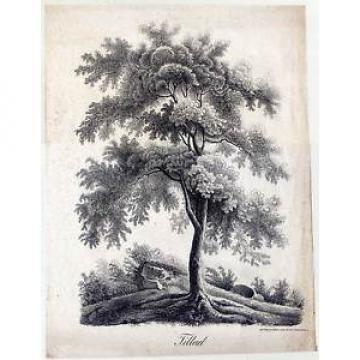 Bäume-Baum-Linde-Tilleul-Landschaft-große Lithographie - Jos. Brucker 1845