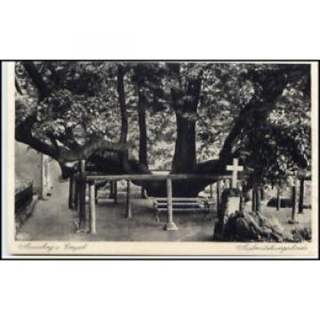 Annaberg-Buchholz um 1940 Baum Auferstehungs-Linde alte Postkarte Sachsen
