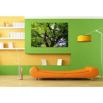 Stunning Poster Wall Art Decor Linde Tilia Tree Malvaceae Leaves 36x24 Inches