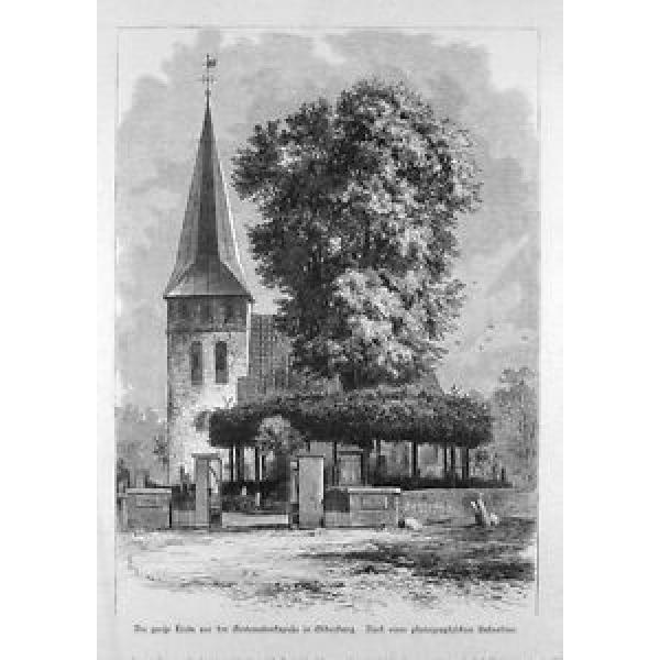Die große Linde vor der Gertraudenkapelle in Oldenburg, gedruckt 1890 #1 image