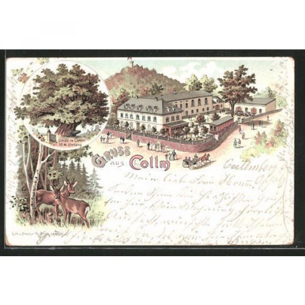 schöne Lithographie Collm, Gasthaus zum Collm, Linde 1899 #1 image