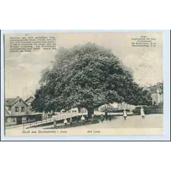 W0P18/ Bordesholm in Holst. Alte Linde Baum  AK 1913 #1 image