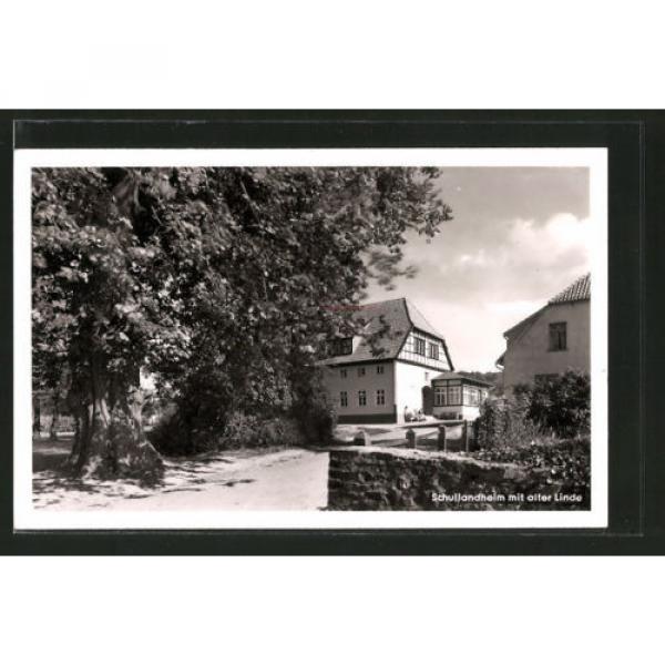 alte AK Barkhausen, Schullandheim mit alter Linde #1 image
