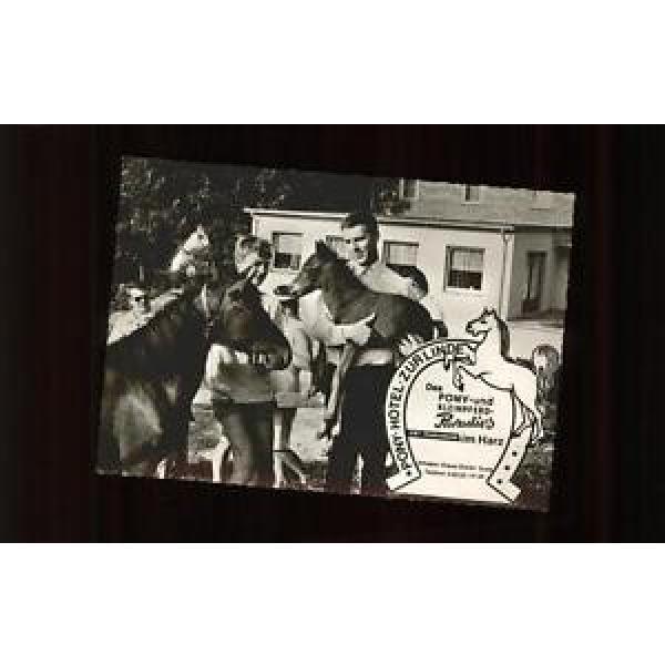 11292352 Pony Tiere Pony Hotel zur Linde Riefensbeek Tiere #1 image
