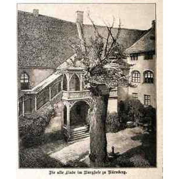 ALTE LINDE Burghof Nürnberg Baum Linden 1894 HST+Text #1 image